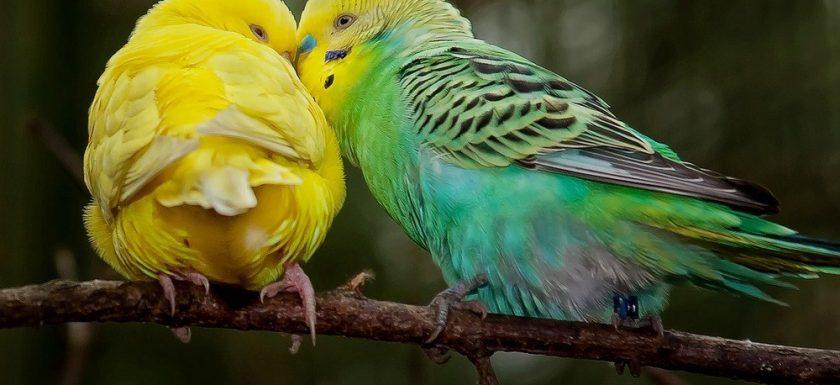 Skäm bort din fågel